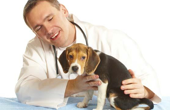 Ветеринарная клиника ВЕТ-АЙБ